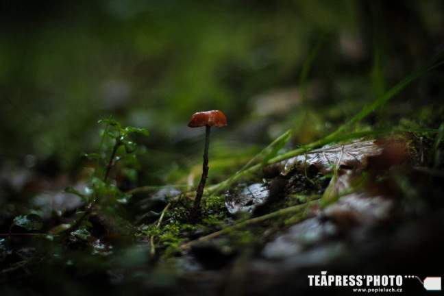 většinou se běželo skrz tzv. magical forest (foto: www.popieluch.cz)